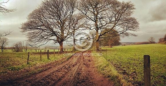 Autumnal walks through fields