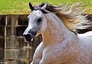 Stallion Action Portrait