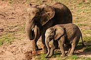 mother and young african elephants