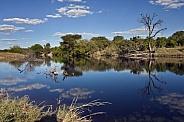 Savuti Channel - Botswana