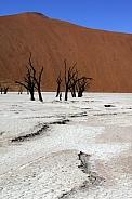 Dead Vlei salt pan - Namib Desert - Namibia