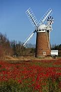 Poppy field - Norfolk - England