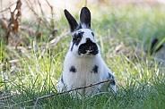 Barnyard mix Rabbit