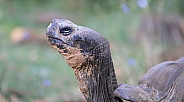 Attention tortoise