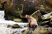 A curious bear cub
