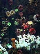 Colourful Sea Urchins
