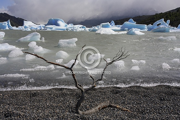 Icebergs in Lago Grey - Patagonia - Chile