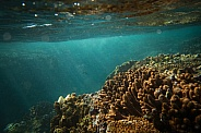 Under the sea - Coral Reef