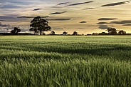 Farmland - North Yorkshire - England