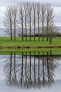 Trees by a lake - Cumbria - England
