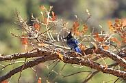 Autumn Stellar's Jay