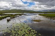 Peat bog - Republic of Ireland